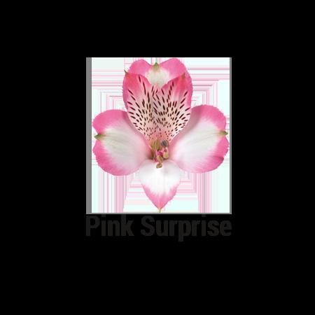 Pink Surprise